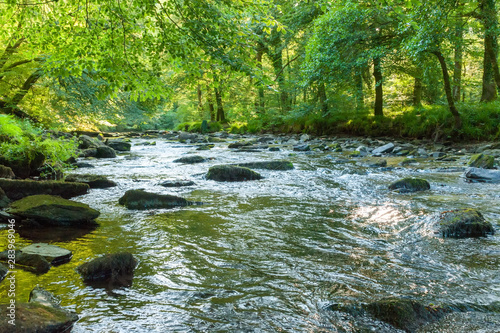 Along the river Barle in Tarr Steps Woodland Fototapeta