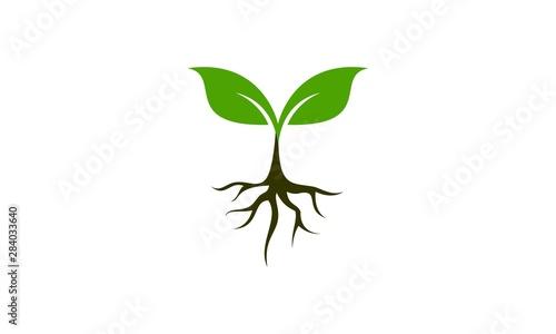 Canvas Print Plant icon