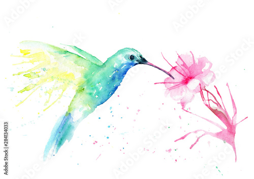 Fotografia watercolor drawing of a hummingbird bird with a flower