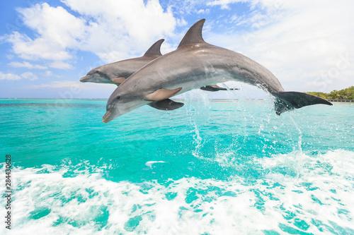 Bottlenose Dolphins (Tursiops Truncatus), Caribbean Sea, Roatan, Bay Islands, Ho Fototapeta