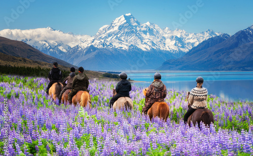 Fotografie, Tablou Travelers ride horses in lupine flower field, overlooking the beautiful landscape of Mt Cook National Park in New Zealand