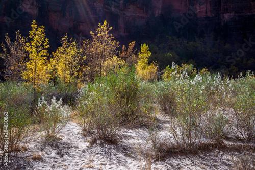 Fotografija Golden Foliage and scrubland in Zion National Park