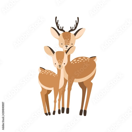 Fotografia Deer with fawn isolated on white background