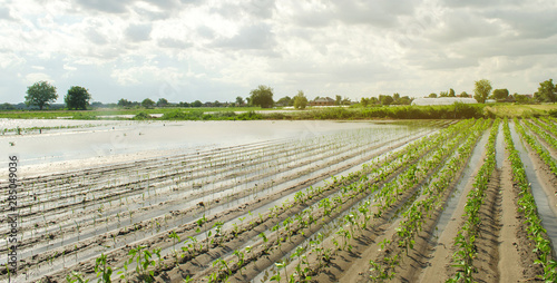 Agricultural land affected by flooding Fototapeta