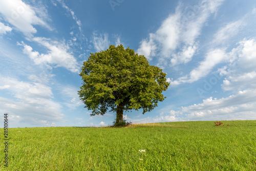 Plakat Drzewo na wzgórzu