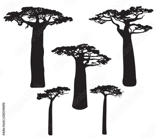 Fotografia Set of black baobab tree silhouettes