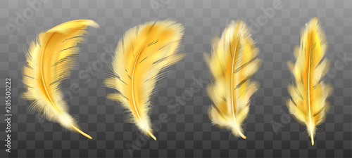 Canvastavla Golden yellow fluffy feather vector realistic set isolated on transparent background