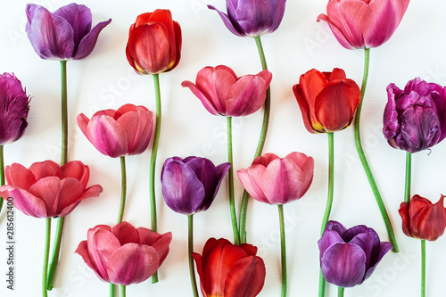 Floral composition with colorful tulip flowers on white background. Flat lay, top view florist blog hero header, summer blossom pattern. #285612400