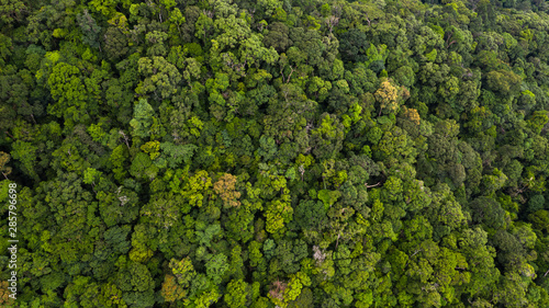 Aerial view asian tropical rainforest, forest tree texture and background, Asia.