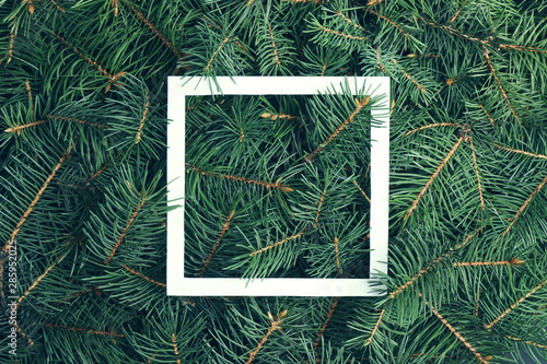 Fotomural Closeup of Christmas tree branches as background, top view