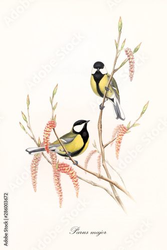Canvas Print Two little yellow and black cute birds on a single thin branch with buds and flowers