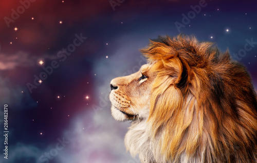 African lion and night in Africa. African savannah moonlight landscape, king of animals. Proud dreaming fantasy lion in savanna looking forward on stars. Majestic dramatic deep starry sky.