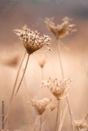 Fotografia, Obraz Dry plants, autumn
