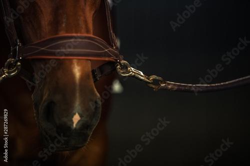 Tablou Canvas Brown Race Horse