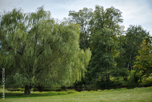 Slika na platnu Weeping willow and pond with Greenfield