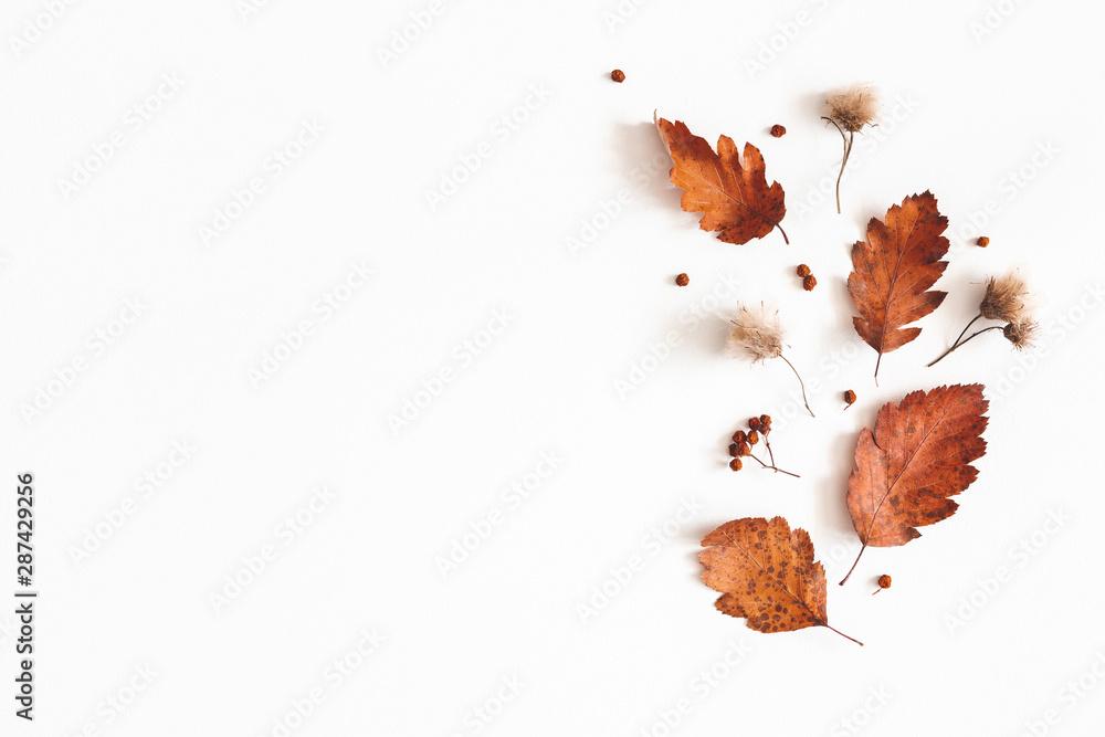 Jesienna kompozycja. Suszone liście, kwiaty, jagody jarzębiny na białym tle. Jesień, jesień, koncepcja Święto Dziękczynienia. Leżał płasko, widok z góry, miejsce <span>plik: #287429256   autor: Flaffy</span>