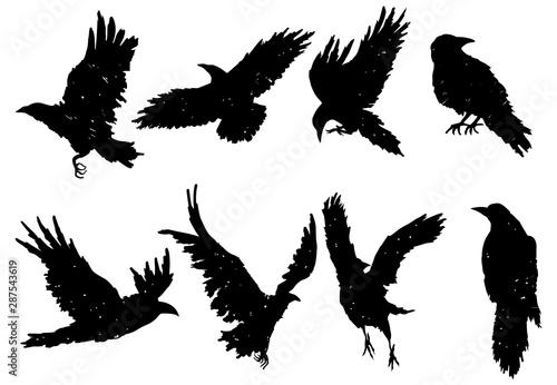 Photo Set of ravens