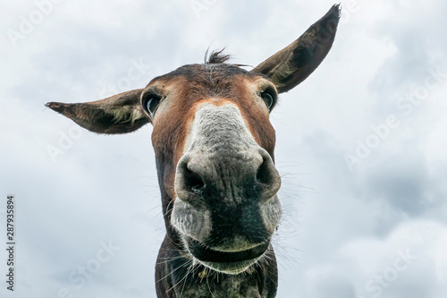 Photo Donkey head close-up taken by downside