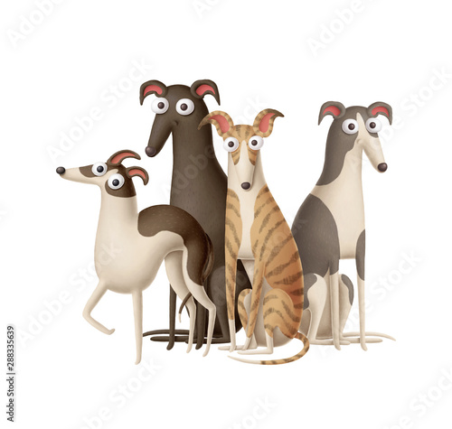 Valokuvatapetti Group of four whippets on a white background