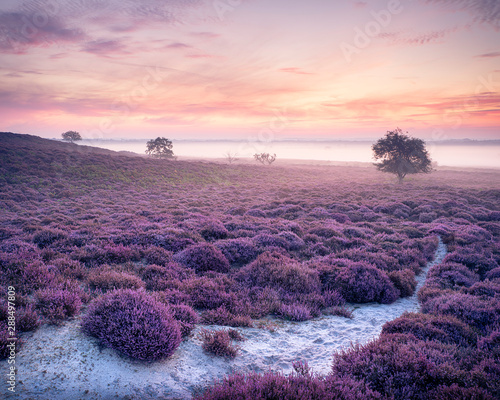 Photo Pink Roydon