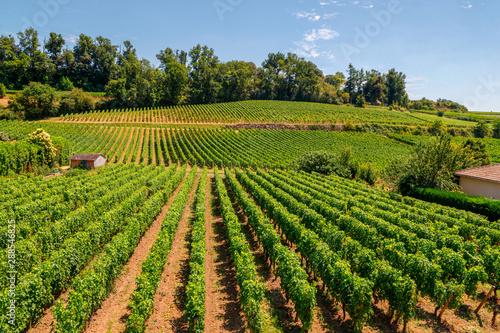 Carta da parati Vineyards of Saint Emilion, Bordeaux, Aquitaine region of France, in a sunny summer day