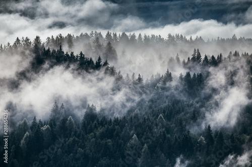 Naklejka premium Gęsta poranna mgła w alpejskim krajobrazie z jodłami i górami.