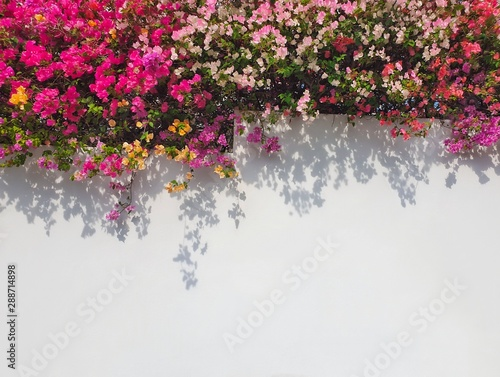 Photo Colorful bougainvillaea flower with copy space.