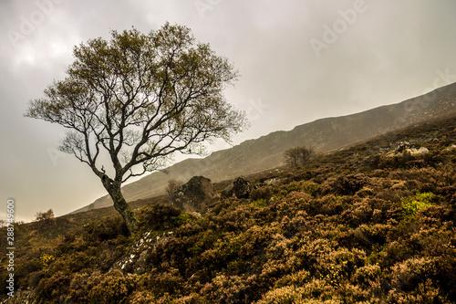 Fotografija Autumn at Loch Muick in Royal Deeside