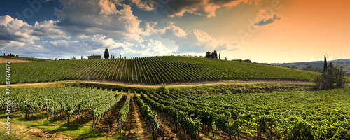 Fotografia beautiful vineyard in tuscan countryside at sunset with cloudy sky in Italy