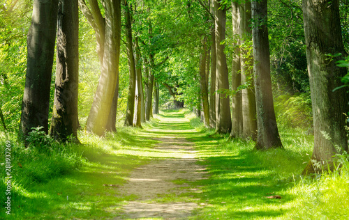 Beautiful Green Forest trees with morning sunlight, Path in spring forest