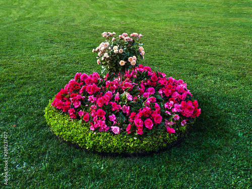 Valokuva Round flowerbed with flowers on the green lawn.
