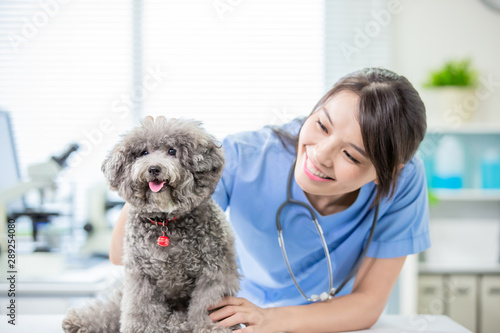 Photographie pet dog and the vet