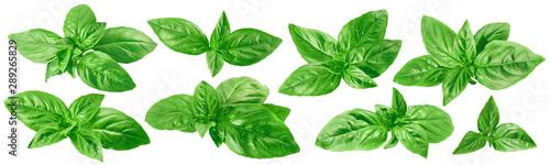 Cuadros en Lienzo Fresh green basil set isolated on white background