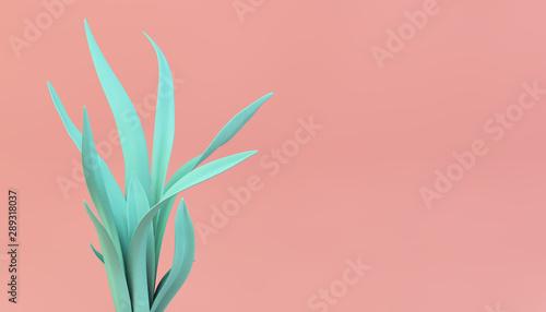 vivid color plant on pink background