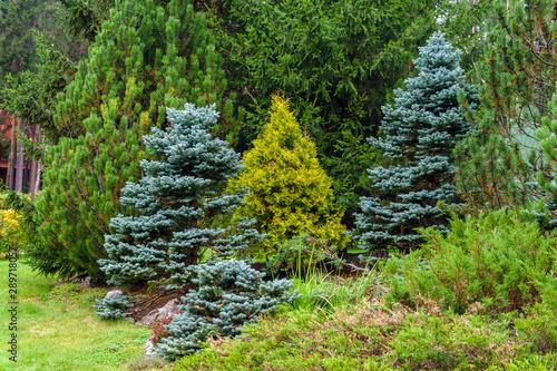 Photo various conifers as an element of landscape design