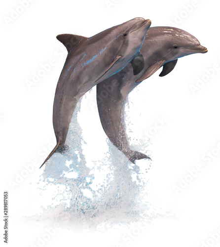 Cuadros en Lienzo Two jumping dolphins isolated