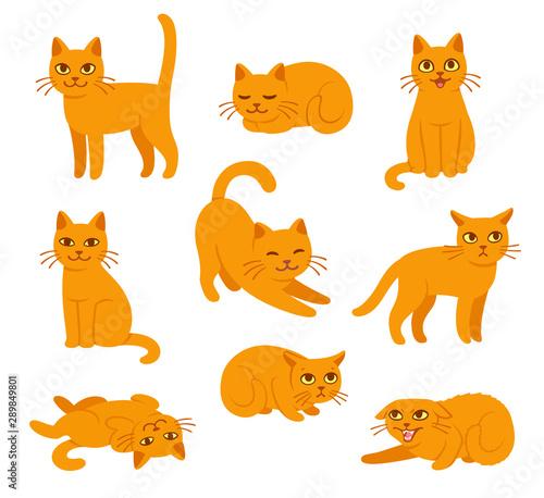 Slika na platnu Cartoon cat poses set