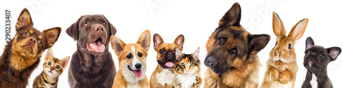 set of animals on a white background
