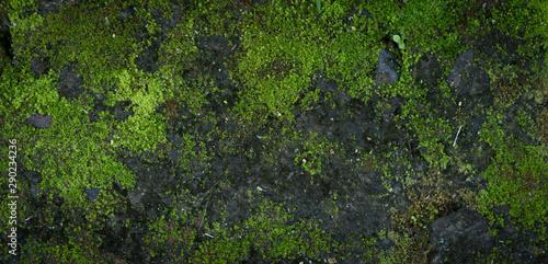 Moss green texture Fototapeta