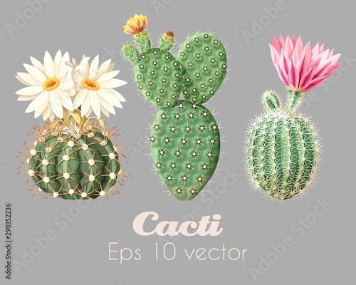 Stampa su Tela Vector illustration set of high detailed cacti