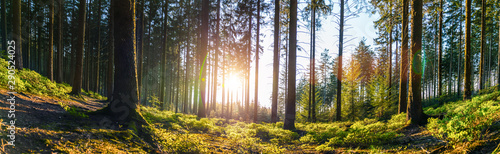 Foto Silent Forest in spring with beautiful bright sun rays
