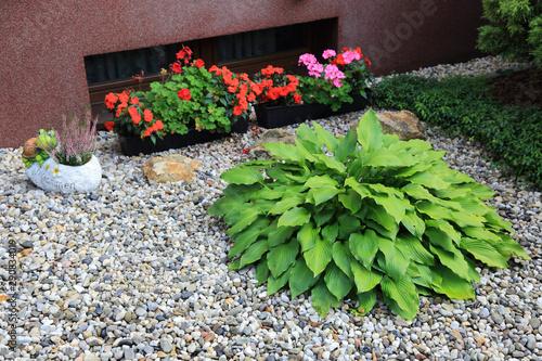 Klomb przed domem z kolorowych jesiennych kwiatów, na kamienistym podłożu.