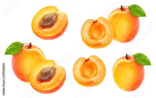 Fotografija Apricot fruit set watercolor isolated on white background