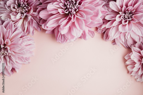 Fotografering Flatlay of dahlia heads on a pink background