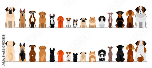 Photo small and large dogs border border set, full length, front and back