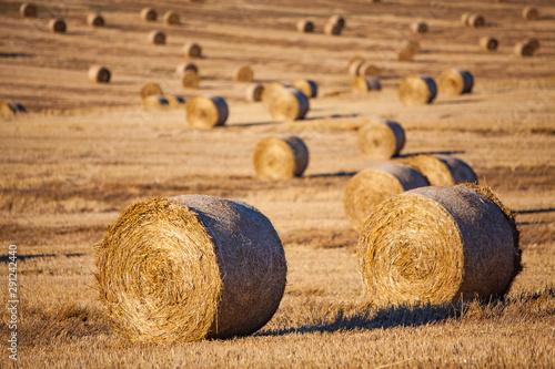 haystacks in evening light Fototapet