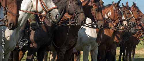 Fotografiet heads of horses in harnesses lined up