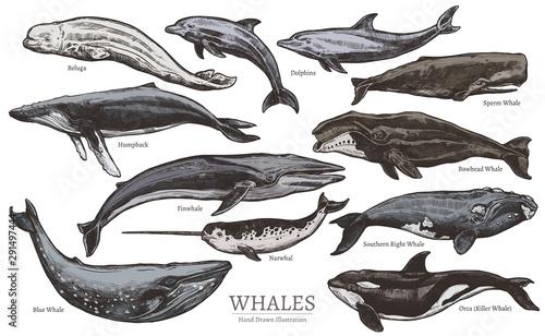 Obraz na płótnie Whales color sketch set