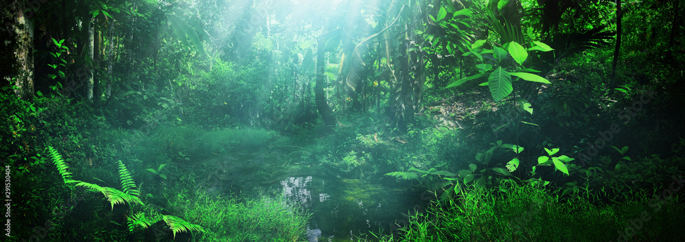 Beautiful green forest panorama background <span>plik: #291530404   autor: fotokitas</span>
