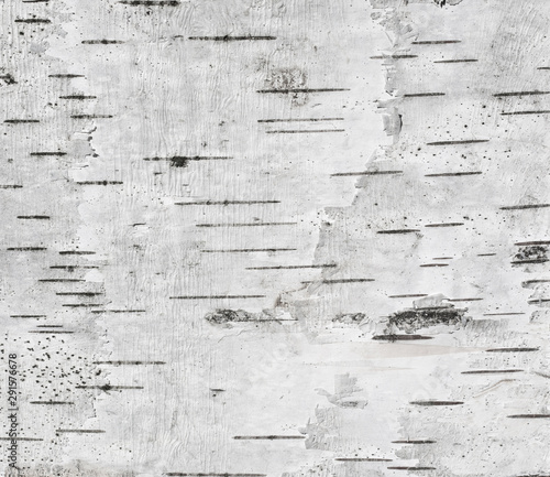 Canvas Print Gray background with horizontal stripes based on the texture of the birch bark